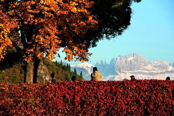 Sudtirol — Alto Adige