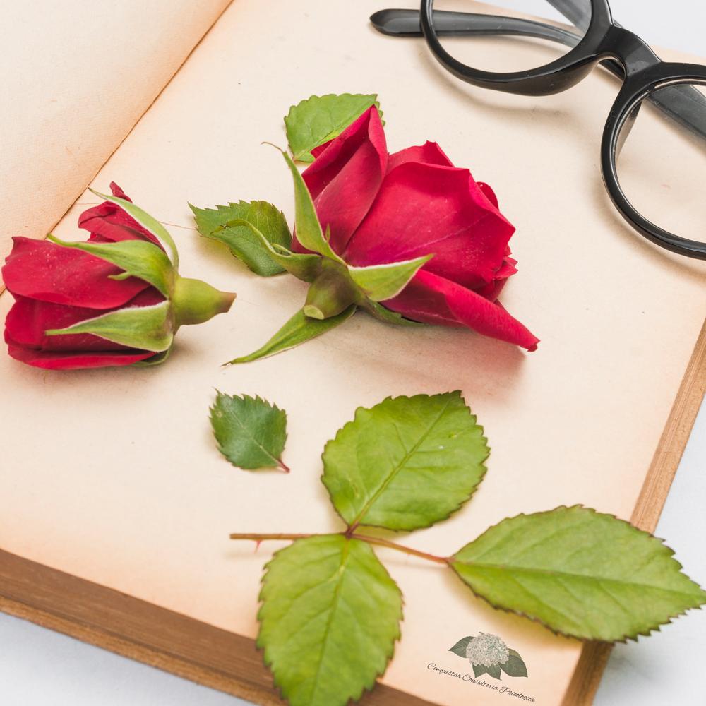 O Poema da Rosa